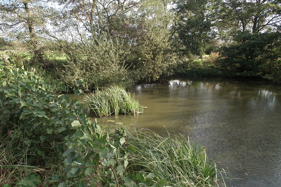 Brooklands - Pond within site 2