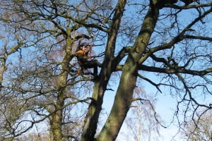 Arboricultural Consultant