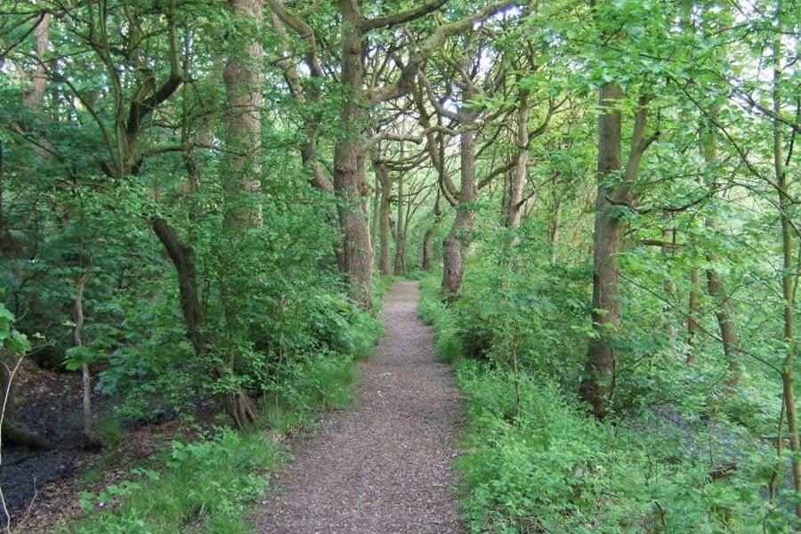 TS.WS.Black Brook Corridor Woodland