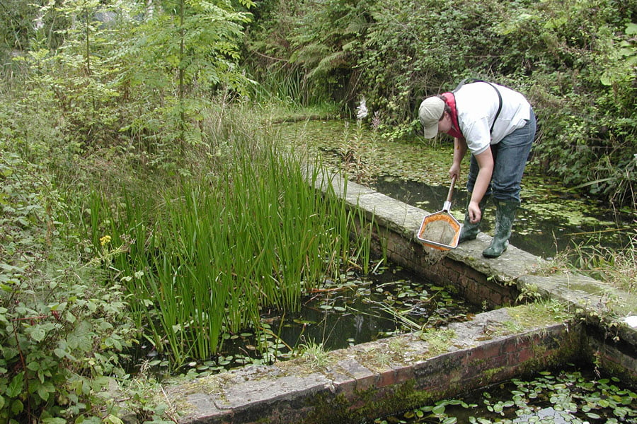 TS.WS.Amphibian survey at disused water treatment works