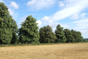 Telford Trees