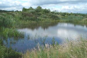 Manor Park Wetland