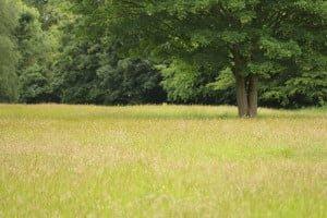 Land Trust Biodiversity Action Plans