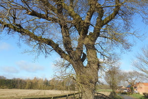 Mature trees surveyed for bat roost potential