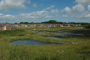 Completed wetland habitat