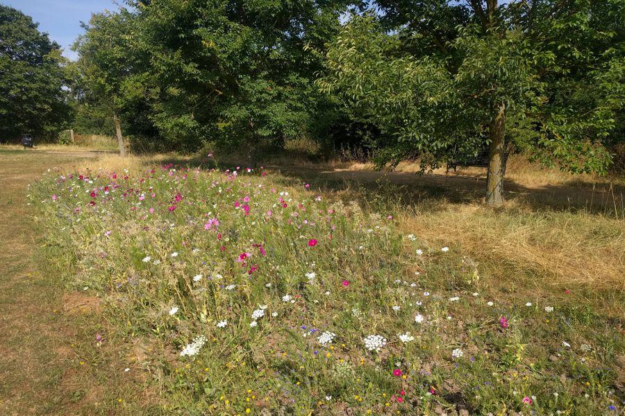 TS.WS.Morden Park Meadow