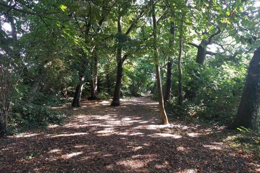 TS.WS.Morden Park Woodland