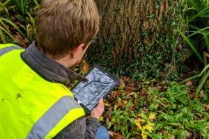 Tree Plotter Innovates Tree Risk Assessments