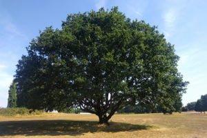 Senior Arboricultural Consultant
