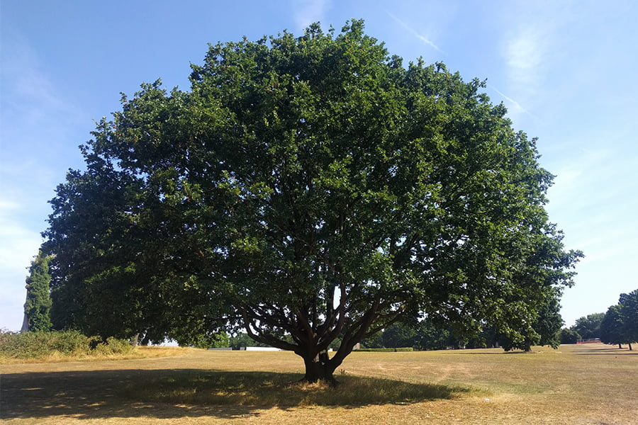 Arboriculture - The Root of Climate Action?