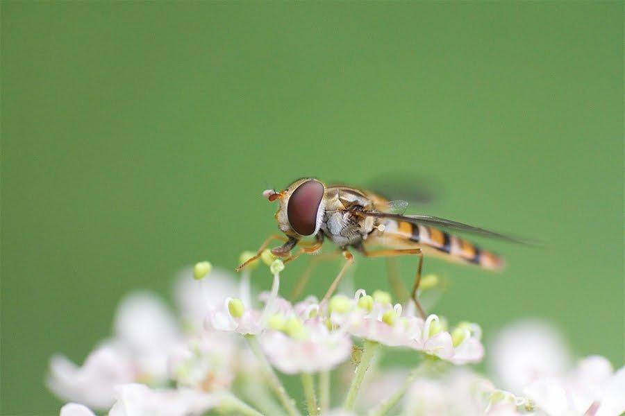 Ecology Ensures Natural Sustainability
