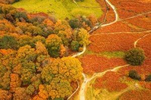 The Environment Partnership - Acorn to Oak - The GIS Story