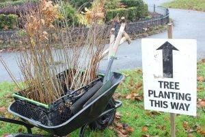 Tree Planting This Way