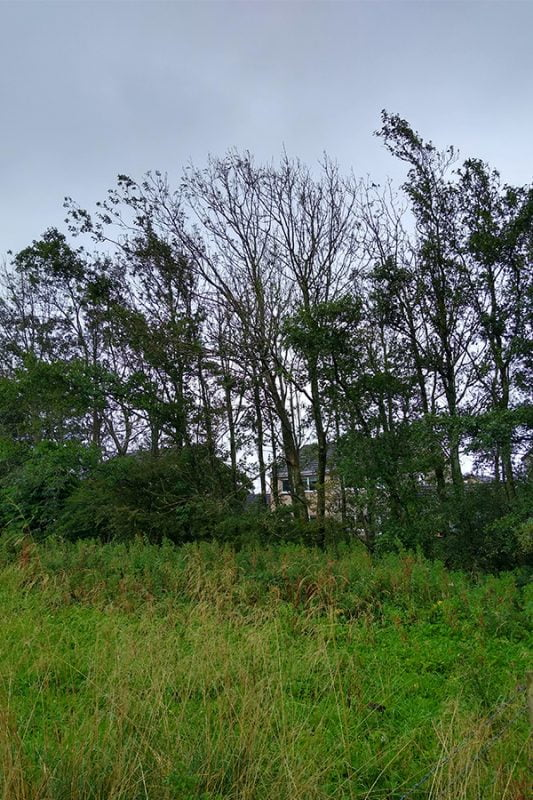 Ash Dieback causes the canopy to thin and a progressive decline of the whole tree.