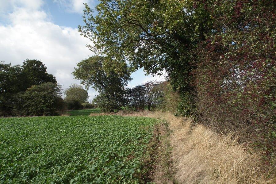 Landscape Garden Near Brooklands